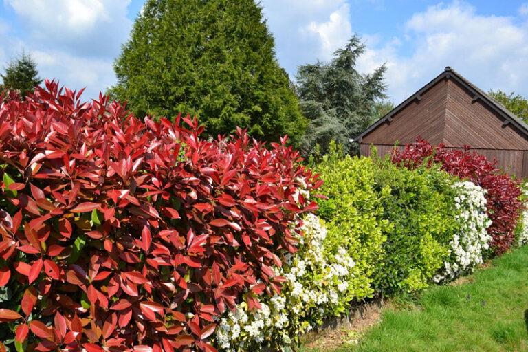 Heckenpflanzen für den heimischen Garten